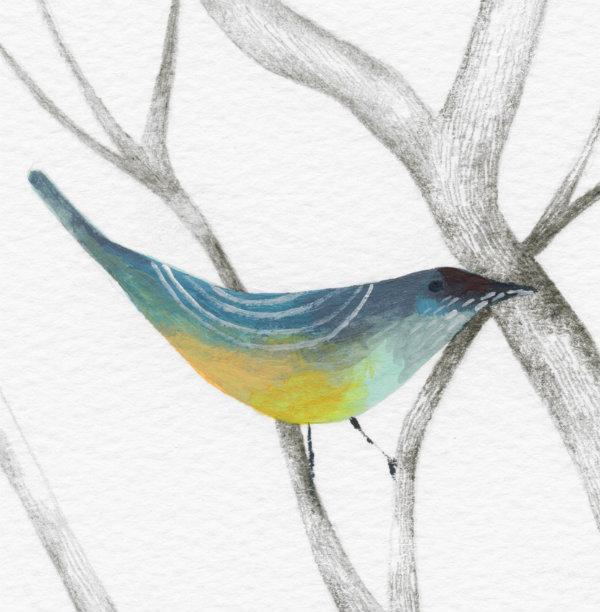 workshop bird