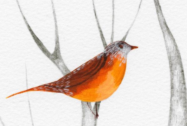 workshop bird3