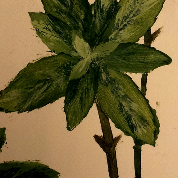 bowery herbs