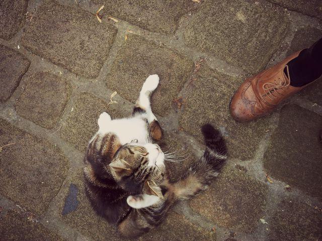 bronte cat