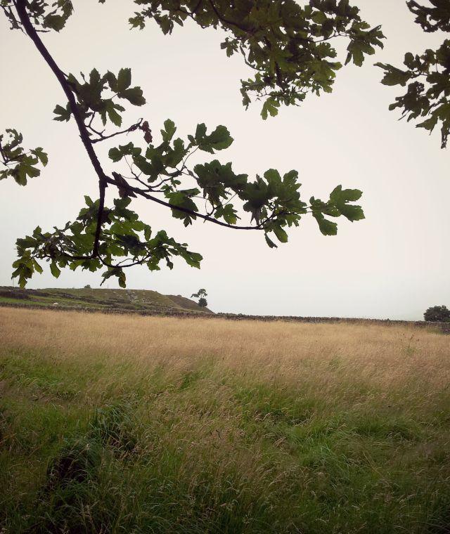 bronte landscape