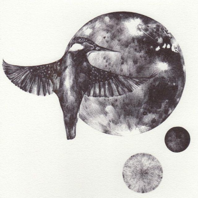 blog kingfisher 2