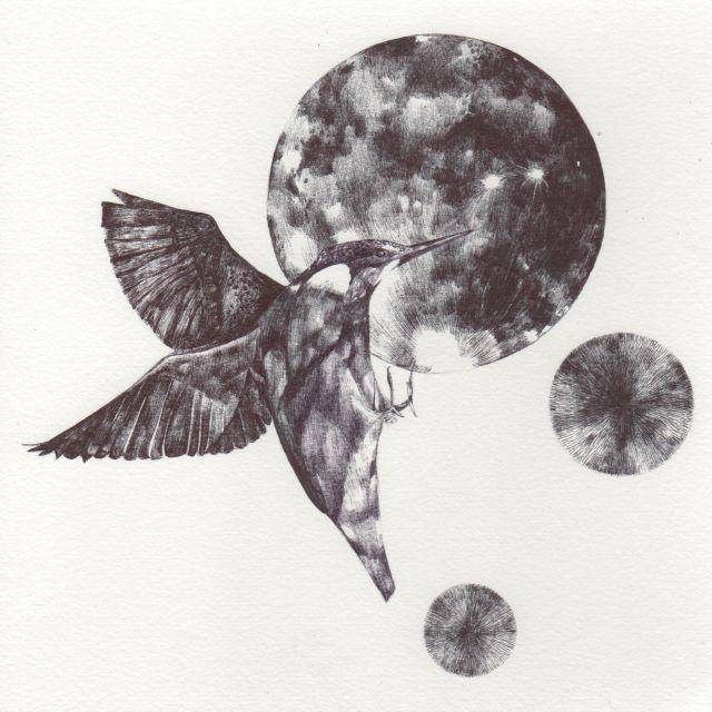 blog kingfisher 3