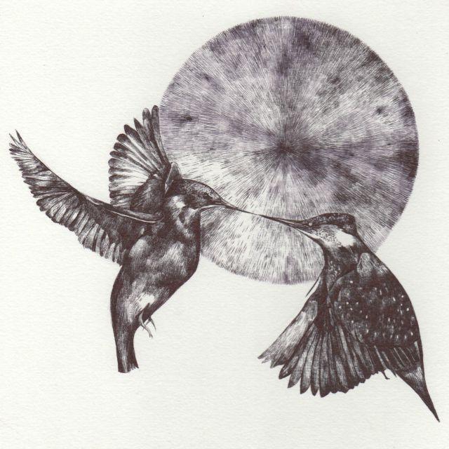 blog kingfisher