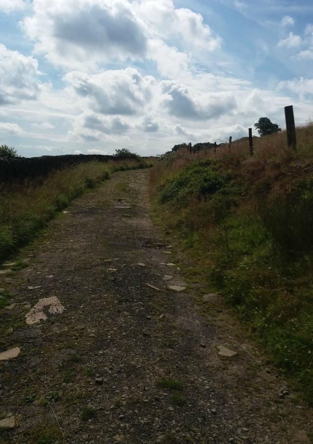 blog landscape 4