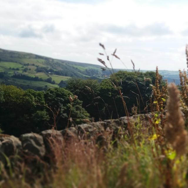 blog landscape 7