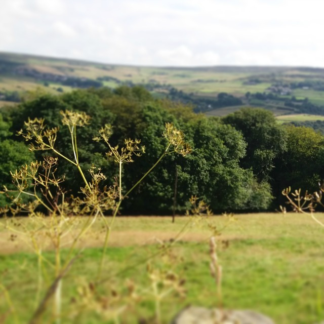 blog landscape