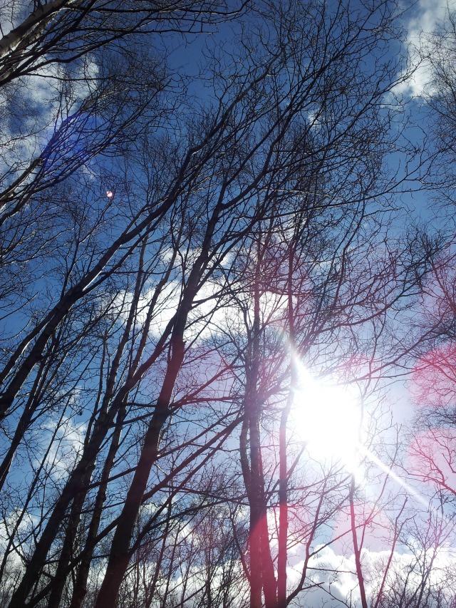 blog trees