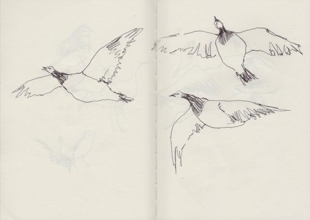 birds-2-blog