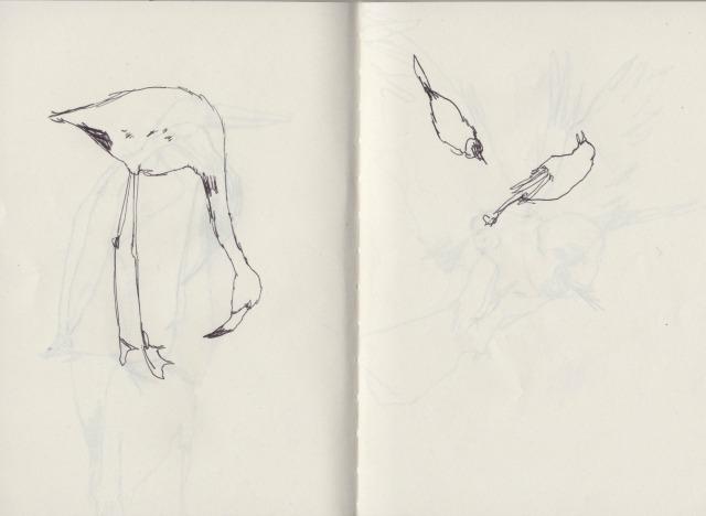 birds-3-blog