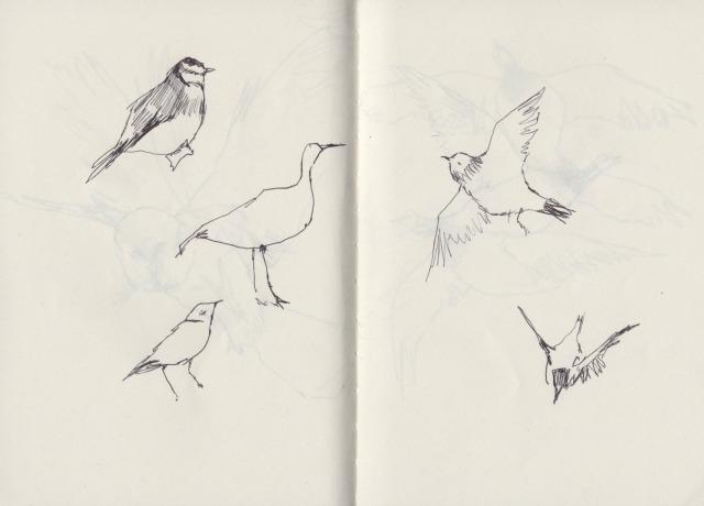 birds-blog1