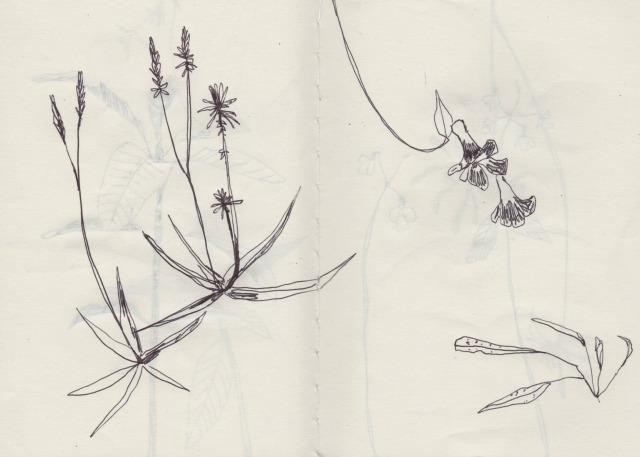botanical-drawing-2