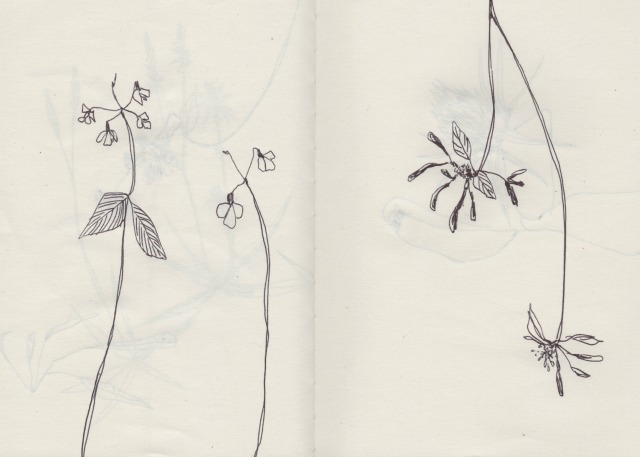 botanical-drawing-3