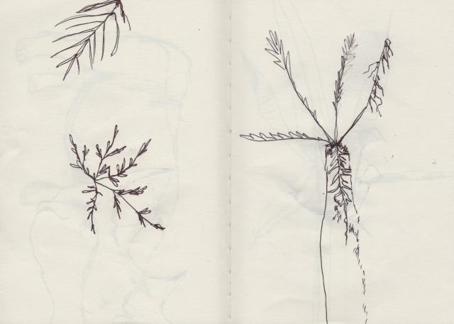 botanical-drawing-4