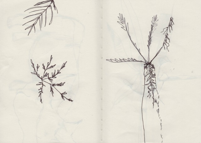 botanical-drawing-4